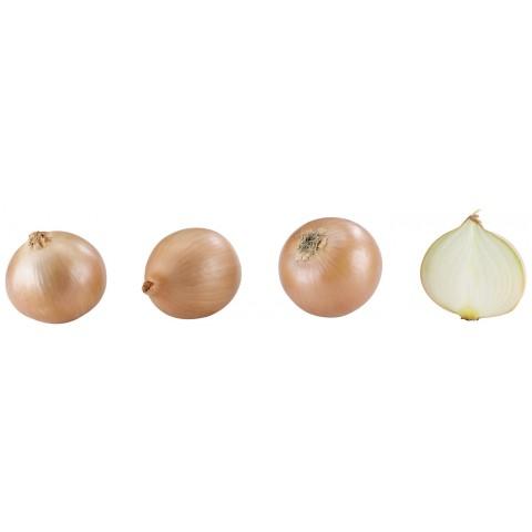 Gemüsezwiebeln im Netz Klasse I
